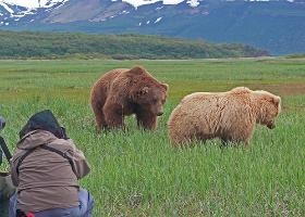 bear viewing Alaska, bear photography, bear safety, bear behavior